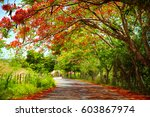 fascinating road under the... | Shutterstock . vector #603867974