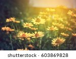 summer blooming natural sunset... | Shutterstock . vector #603869828