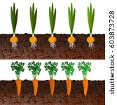growing onions and carrots in... | Shutterstock .eps vector #603873728