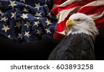north american bald eagle with... | Shutterstock . vector #603893258