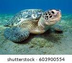 turtle on the sandy bottom in... | Shutterstock . vector #603900554
