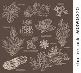 collection of herbs and spice.... | Shutterstock .eps vector #603906320