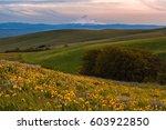 mount hood catching sunset... | Shutterstock . vector #603922850