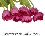 pink tulip flowers bouquet...   Shutterstock . vector #603929210