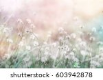 grass flower field in spring... | Shutterstock . vector #603942878