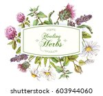 vector healing herbs horizontal ... | Shutterstock .eps vector #603944060