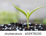 small plant growing out of soil ... | Shutterstock . vector #603978230