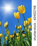 Yellow Tulips On Sky Background