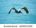pelican flying low over... | Shutterstock . vector #604031300
