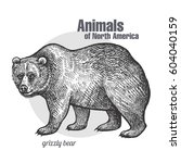 grizzly bear. hand drawing of... | Shutterstock .eps vector #604040159