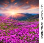 colorful summer sunrise with... | Shutterstock . vector #604043744