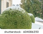 hedge with snow | Shutterstock . vector #604086350