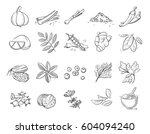 doodle spices and herbs vector... | Shutterstock .eps vector #604094240