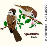 Vector Illustration Of Sparrow...