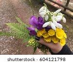 Spring Flowers   Snowdrop ...