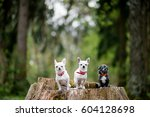 Three Lovely And Cute Chihuahu...