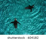 penguins at the new england... | Shutterstock . vector #604182