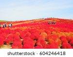kokia in hitachi seaside park | Shutterstock . vector #604246418