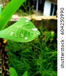 green leaf with water droplets... | Shutterstock . vector #604250990