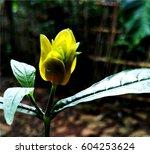 beautiful yellow flower... | Shutterstock . vector #604253624