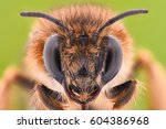 extreme magnification   honey... | Shutterstock . vector #604386968