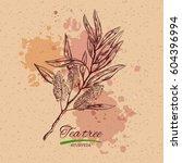 tea tree. vector hand drawn... | Shutterstock .eps vector #604396994