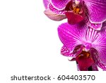 orchid  pink flower with water... | Shutterstock . vector #604403570