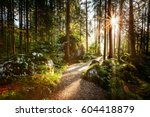 Magical scenic and pathway through woods in the morning sun. Dramatic scene and picturesque picture. Wonderful natural background. Location place Germany Alps, Europe. Explore the world