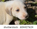 Cute White Dog Puppy And Green...