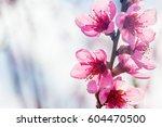 a spring pink flowers... | Shutterstock . vector #604470500