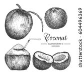 coconut hand drawn collection... | Shutterstock .eps vector #604496369