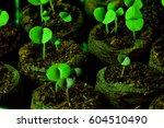 Seedling Green Land Spring...
