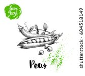 hand drawn sketch peas with... | Shutterstock .eps vector #604518149