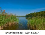 Finnish landscape: Lake and trees on the shore with reed - stock photo