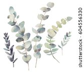 Watercolor Eucalyptus Branches...