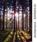 forest trees | Shutterstock . vector #604560110