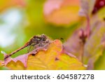 Soft Colored Macro Portrait Of...