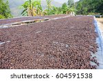 dried coffee cherries selective ... | Shutterstock . vector #604591538