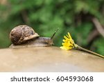 Small photo of Snail with a flower