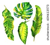 tropical hawaii leaves palm... | Shutterstock . vector #604613573