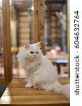 white cat | Shutterstock . vector #604632764