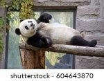 funny panda | Shutterstock . vector #604643870