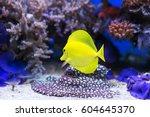 Image Of Yellow Tang Fish In...