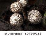 Mushroom And Macro Fungi In...