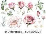 set elements of rose.... | Shutterstock . vector #604664324