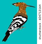 Picture Of The Bird Hoopoe