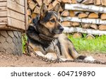 The Chain Guard Dog Sits On A...