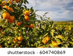 Closeup View Of Oranges On The...