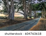 an avenue of trees growing on... | Shutterstock . vector #604763618