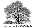 realistic tree silhouette ...   Shutterstock . vector #604804454